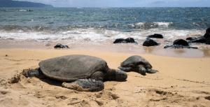 Havaj: HONOLULU