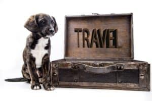 Cestování se zvířetem